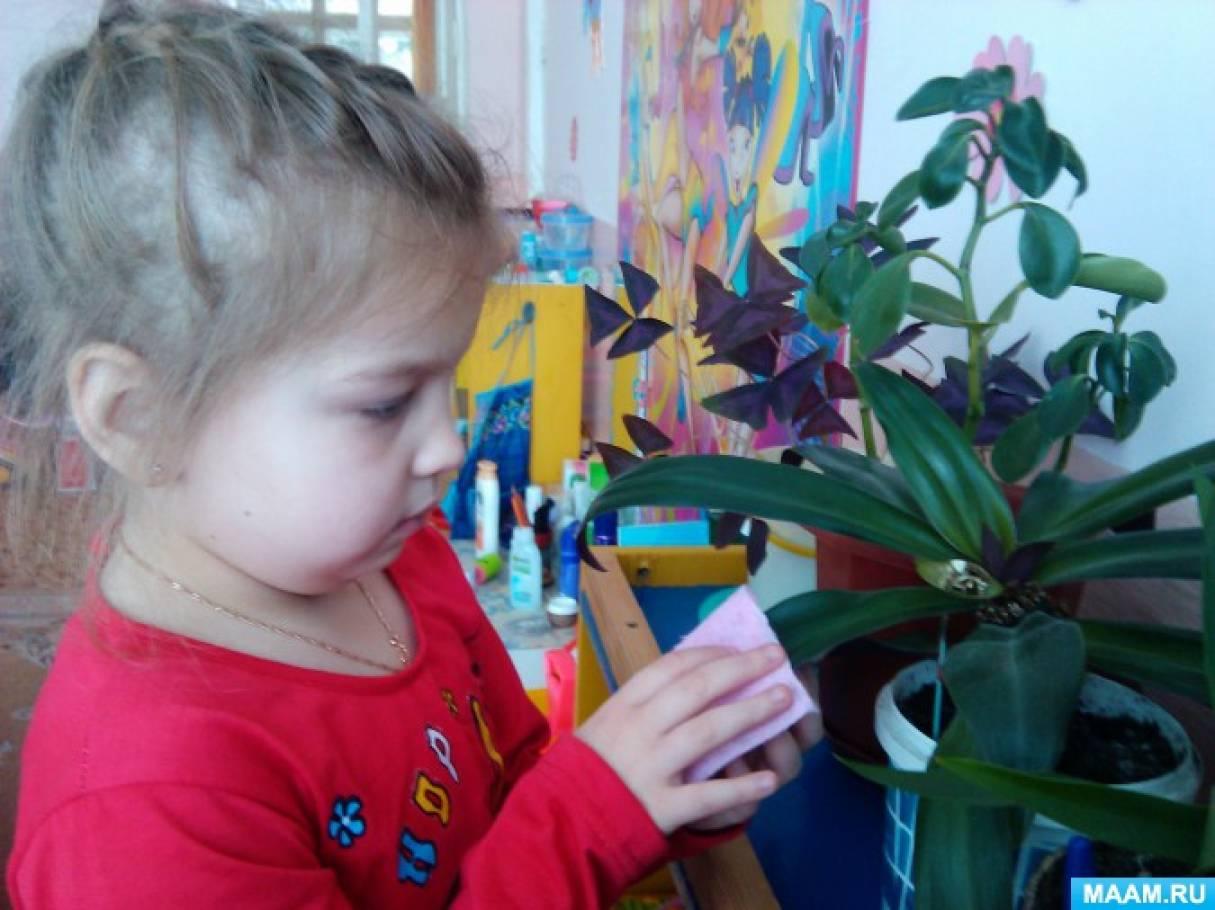 комнатные растения для знакомства в средней группе