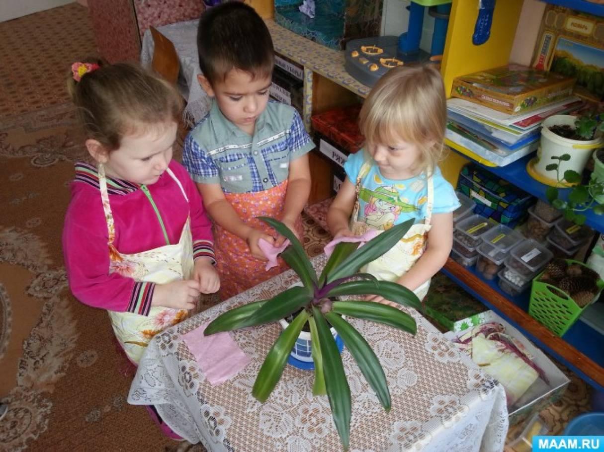 Защита проекта знакомства с комнатными растениями в детском саду виктория александровна 28 августа северодвинск
