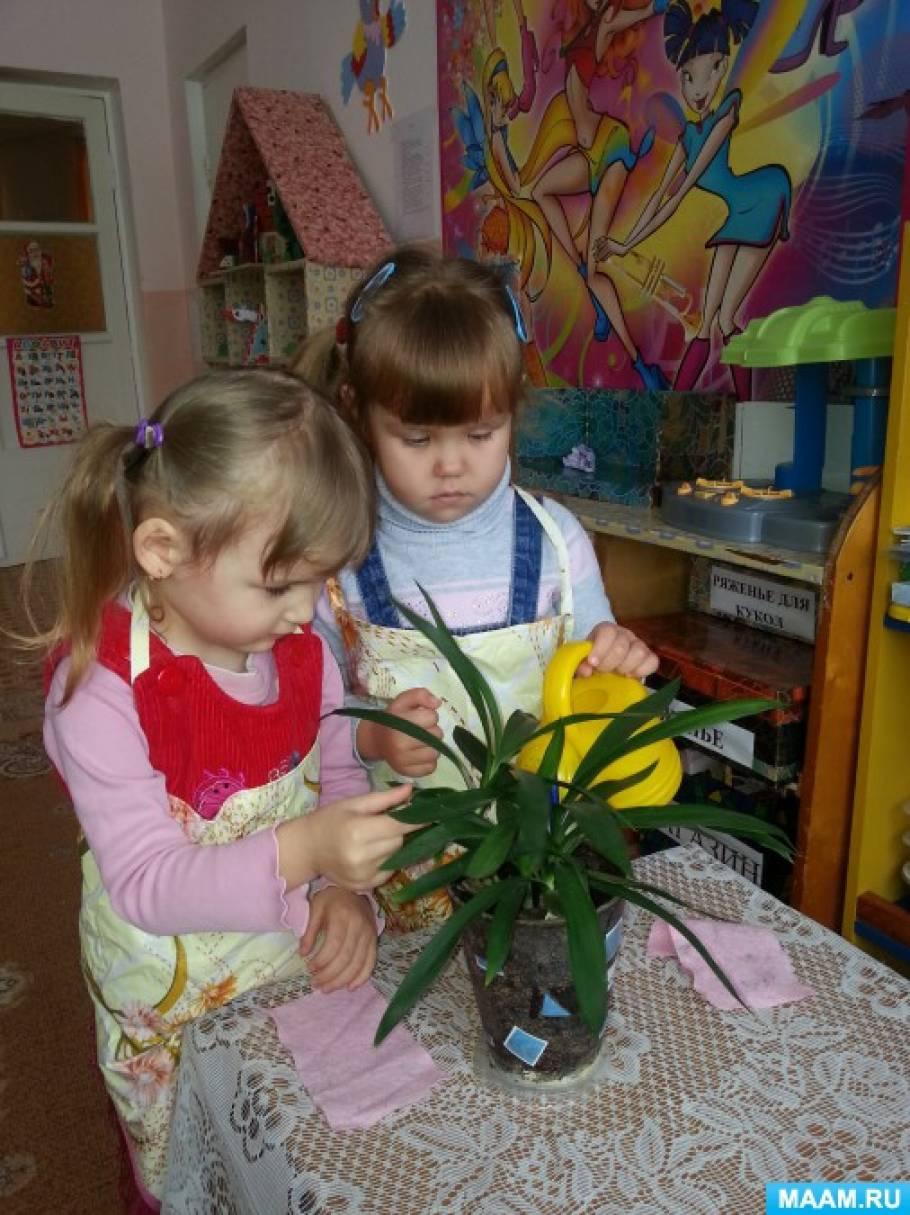 Защита проекта знакомства с комнатными растениями в детском саду знакомства женщинами 40 лет