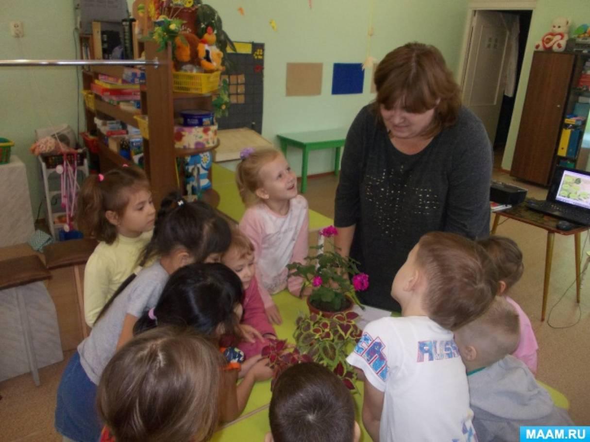 Конспект НОД по познавательному развитию «Мир комнатных растений» в старшей группе