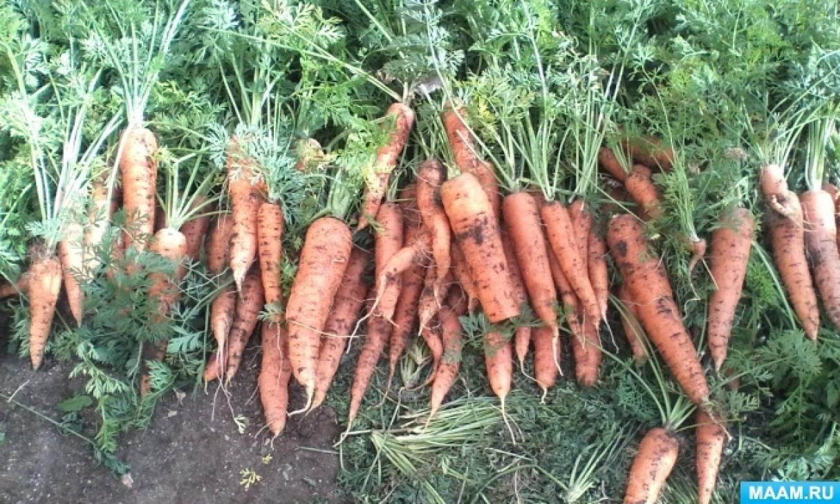 Фотоотчет «Уборка урожая»