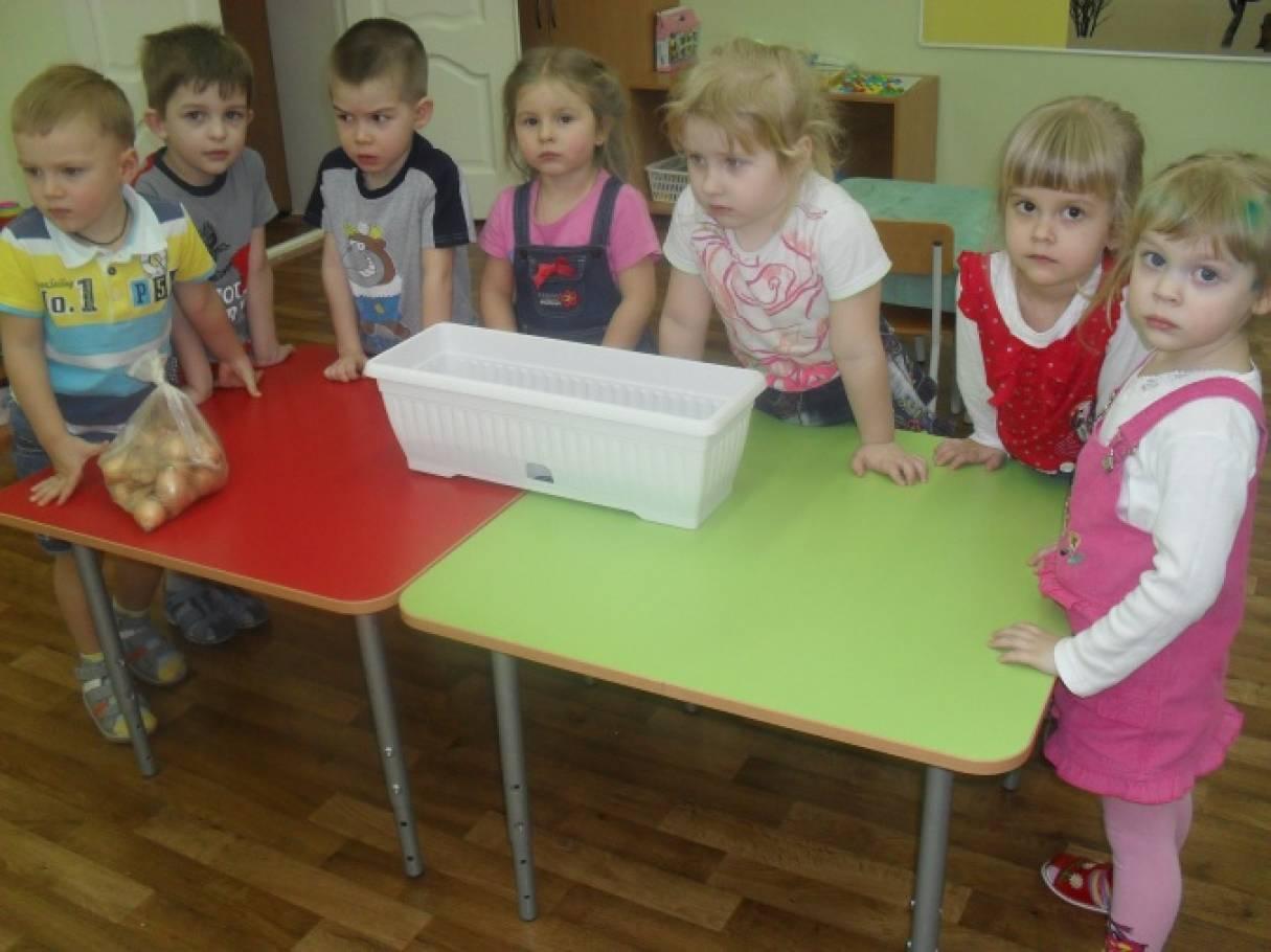 знакомство детей с огородом