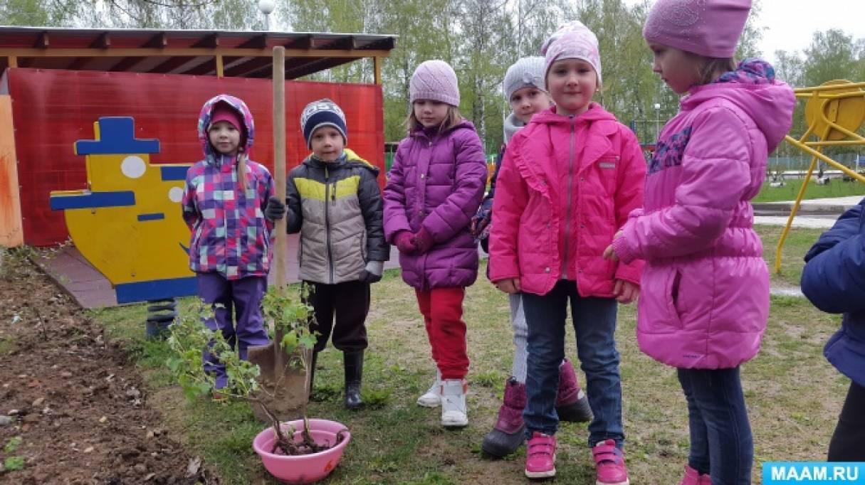 Экологическое воспитание дошкольников. Проект по благоустройству и озеленению территории детского сада