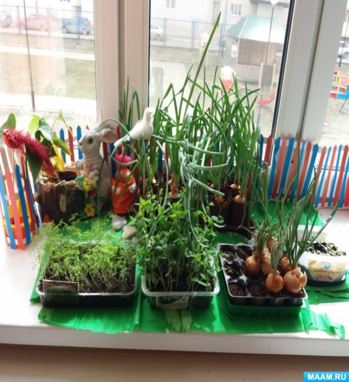 Фотоотчет «Что за чудо-огород на окошке растет»