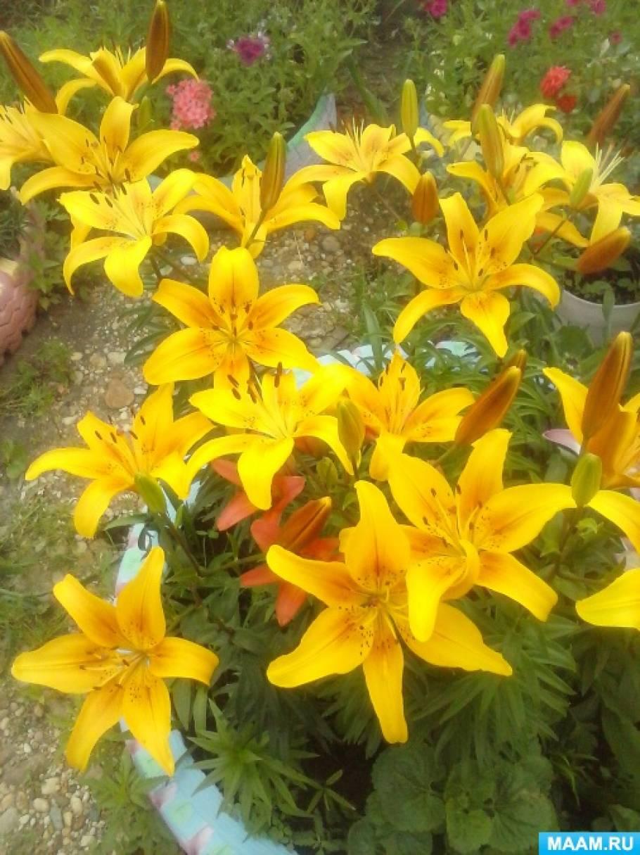 Фотозарисовка «Расцвели в саду моем цветочки»