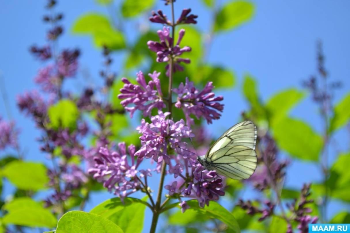 Проект «Бабочки» в старшей группе