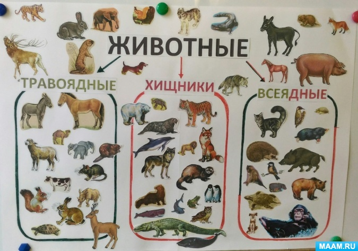Картинки хищники и травоядные