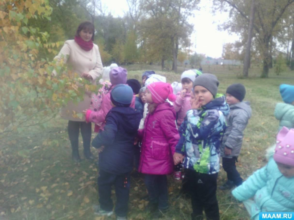 Фоторяд об экскурсии в осенний парк с детьми старшей группы детского сада