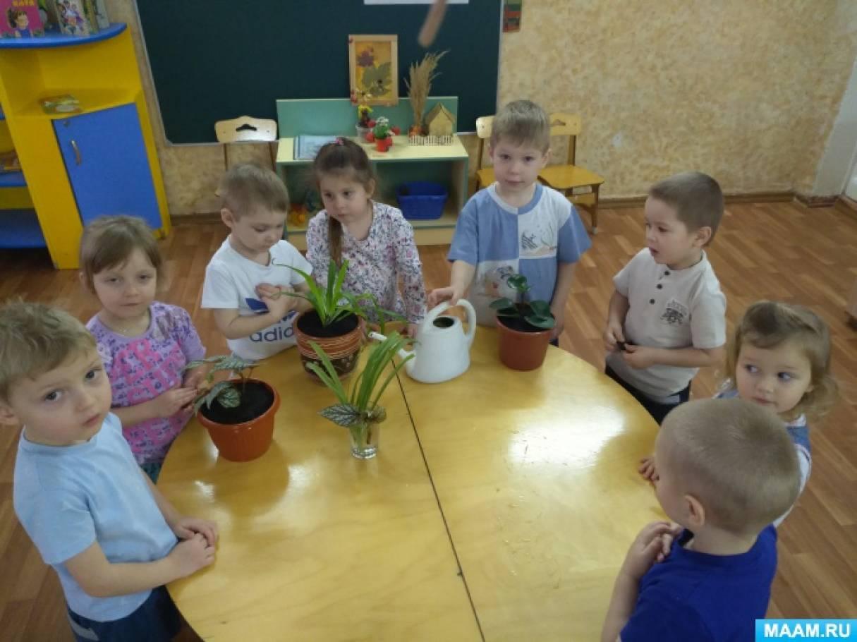 Познавательно-исследовательский проект «Комнатные растения— наши друзья» (средняя группа)