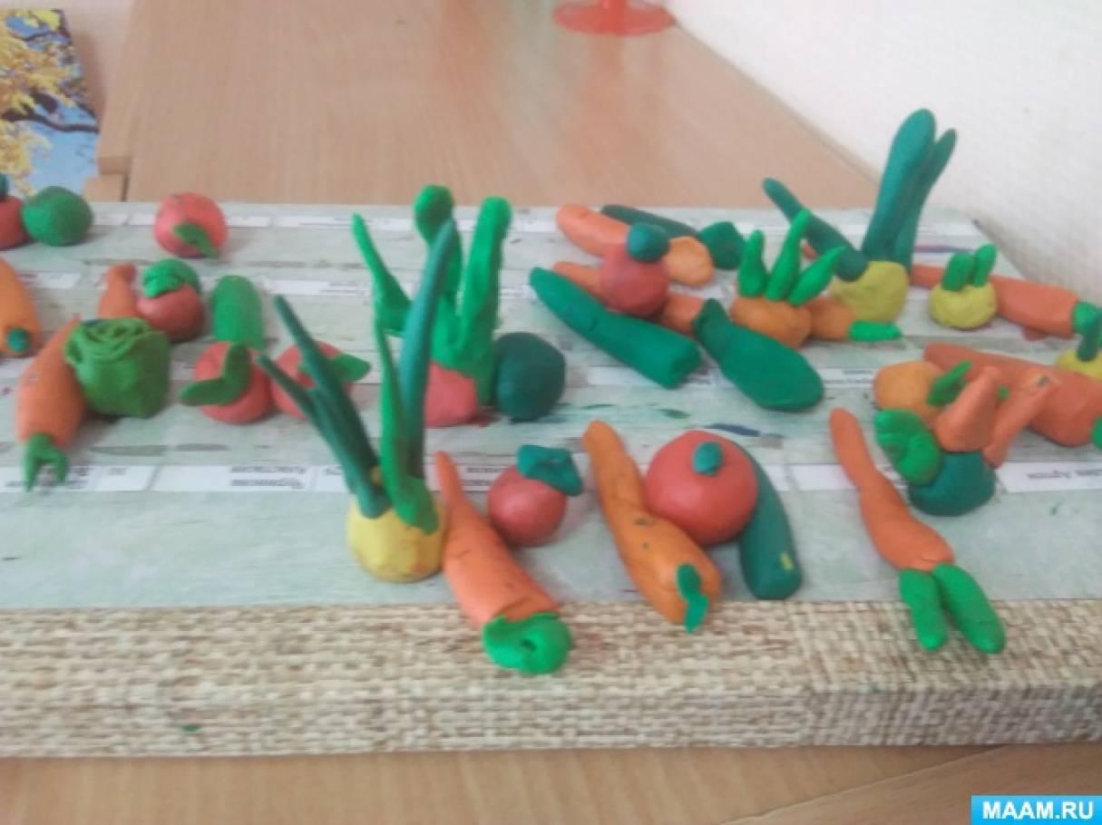 Проект по окружающему миру «Огород на подоконнике» в средней группе