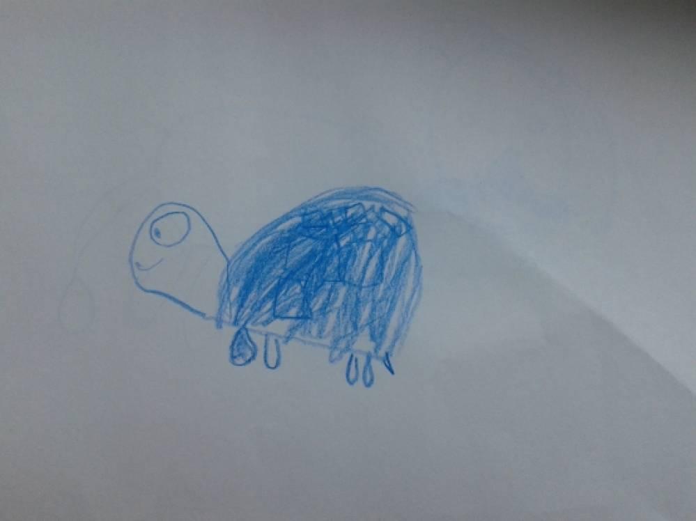 знакомство с черепахой в детском саду