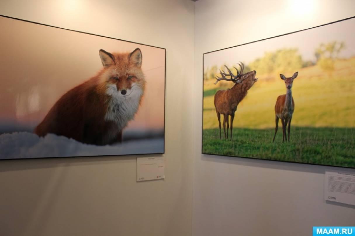 Выставка первозданная россия