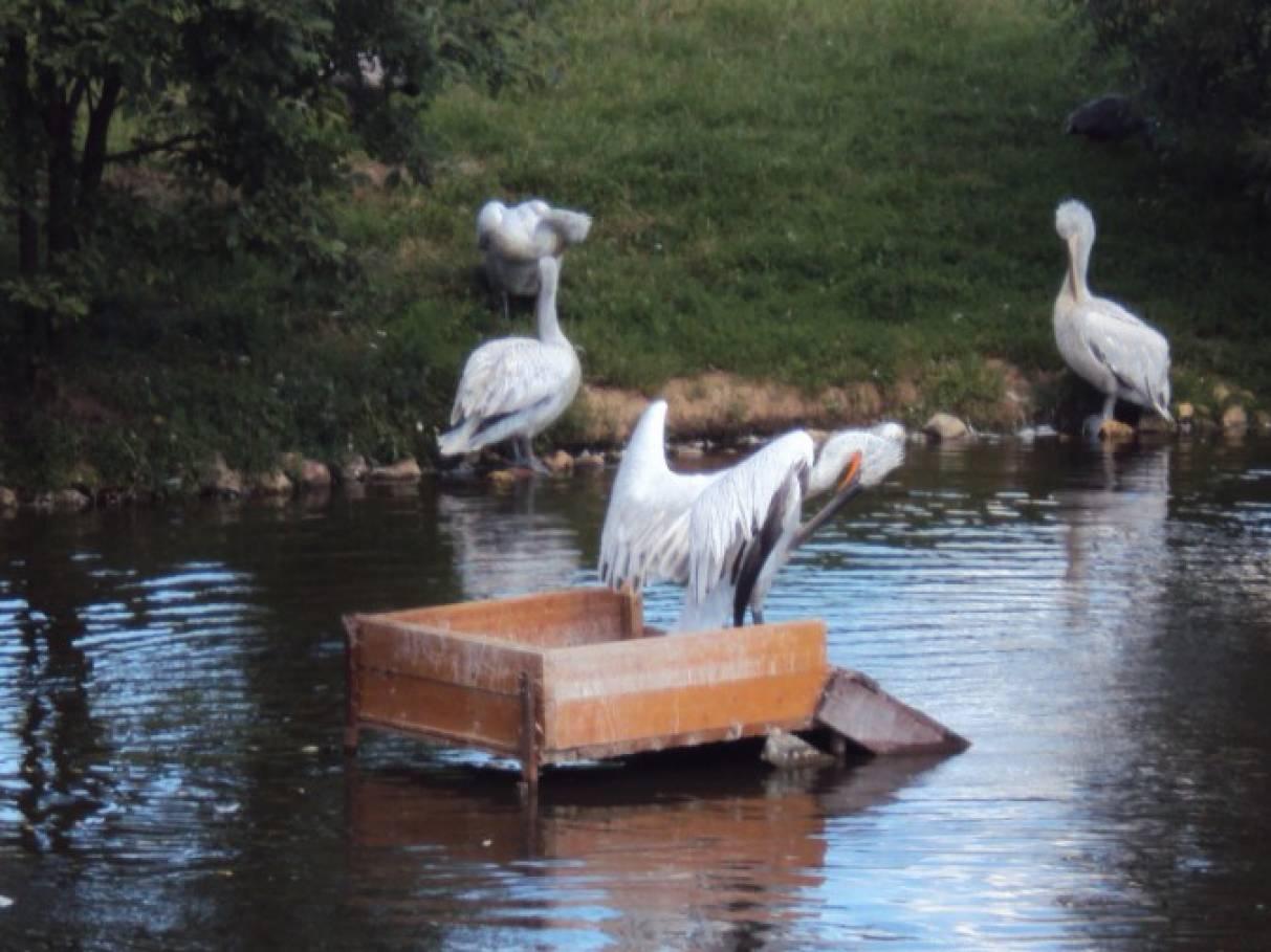парк воробьи рыбалка