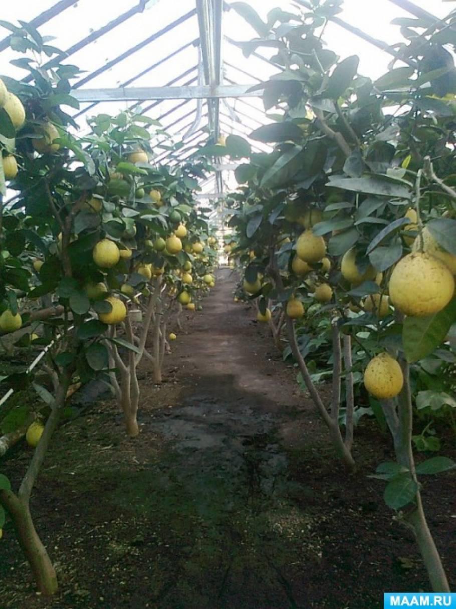 История Магнитогорского лимонария