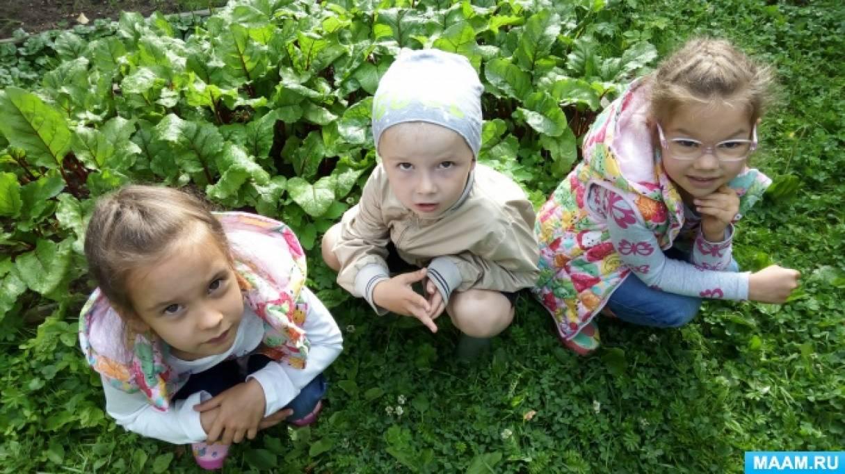 «Наблюдение за ростом овощей в огороде и сбор первого летнего урожая» из цикла «Будни воспитанников семейного детского сада»