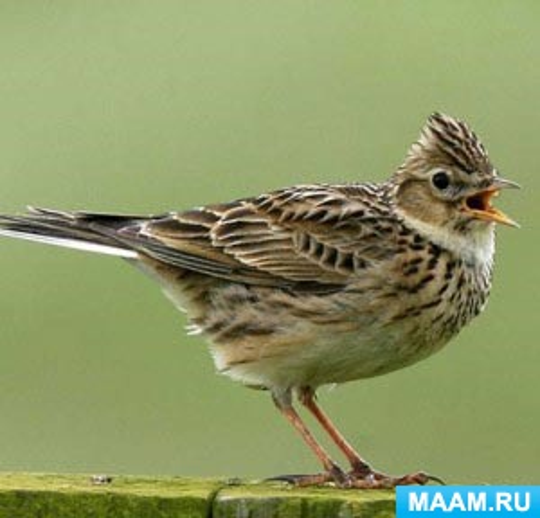 Зимующие и перелетные птицы в картинках для детей от 4–7 лет