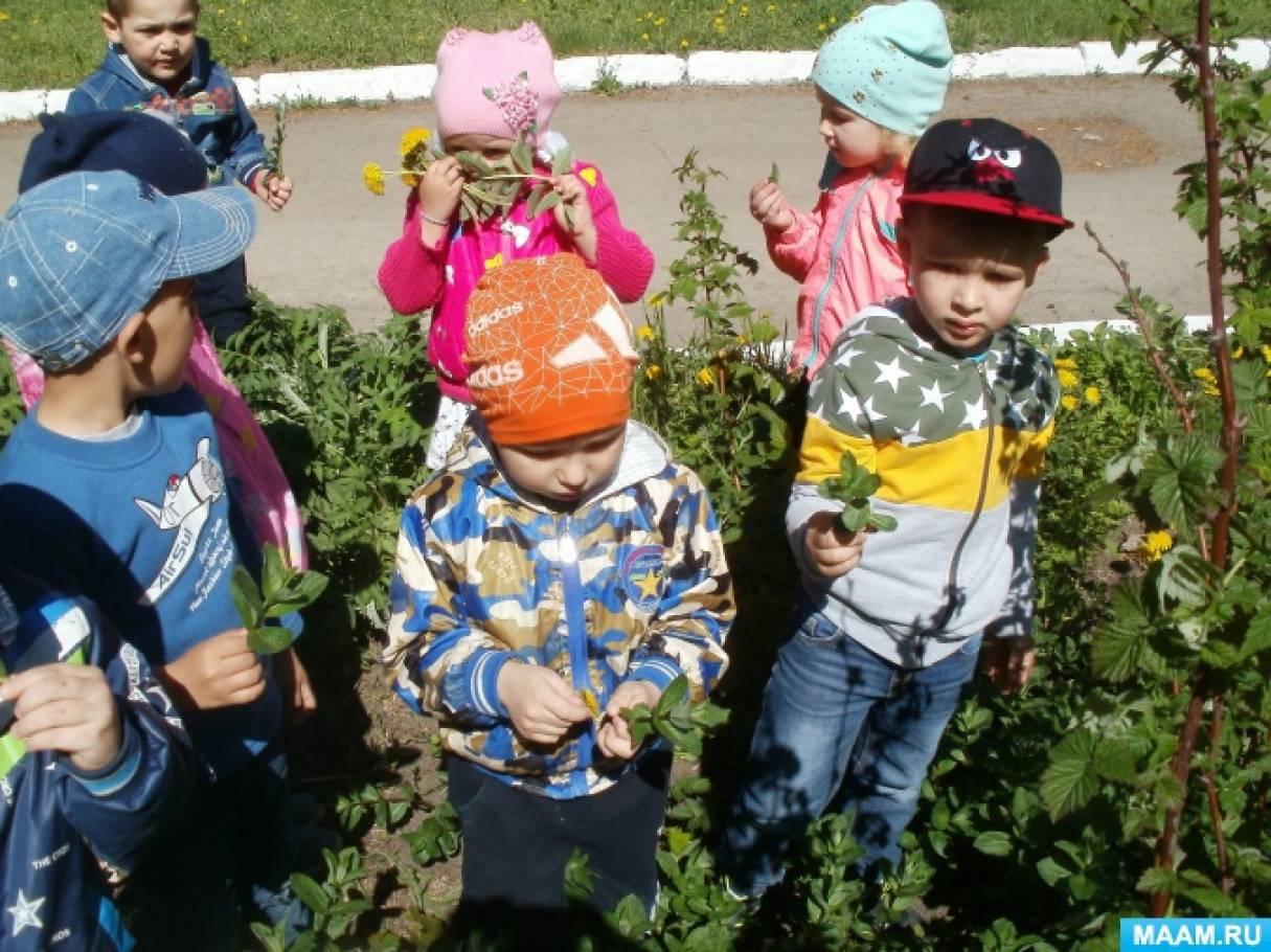 Фотоотчет о реализации проекта «Лекарственные растения»