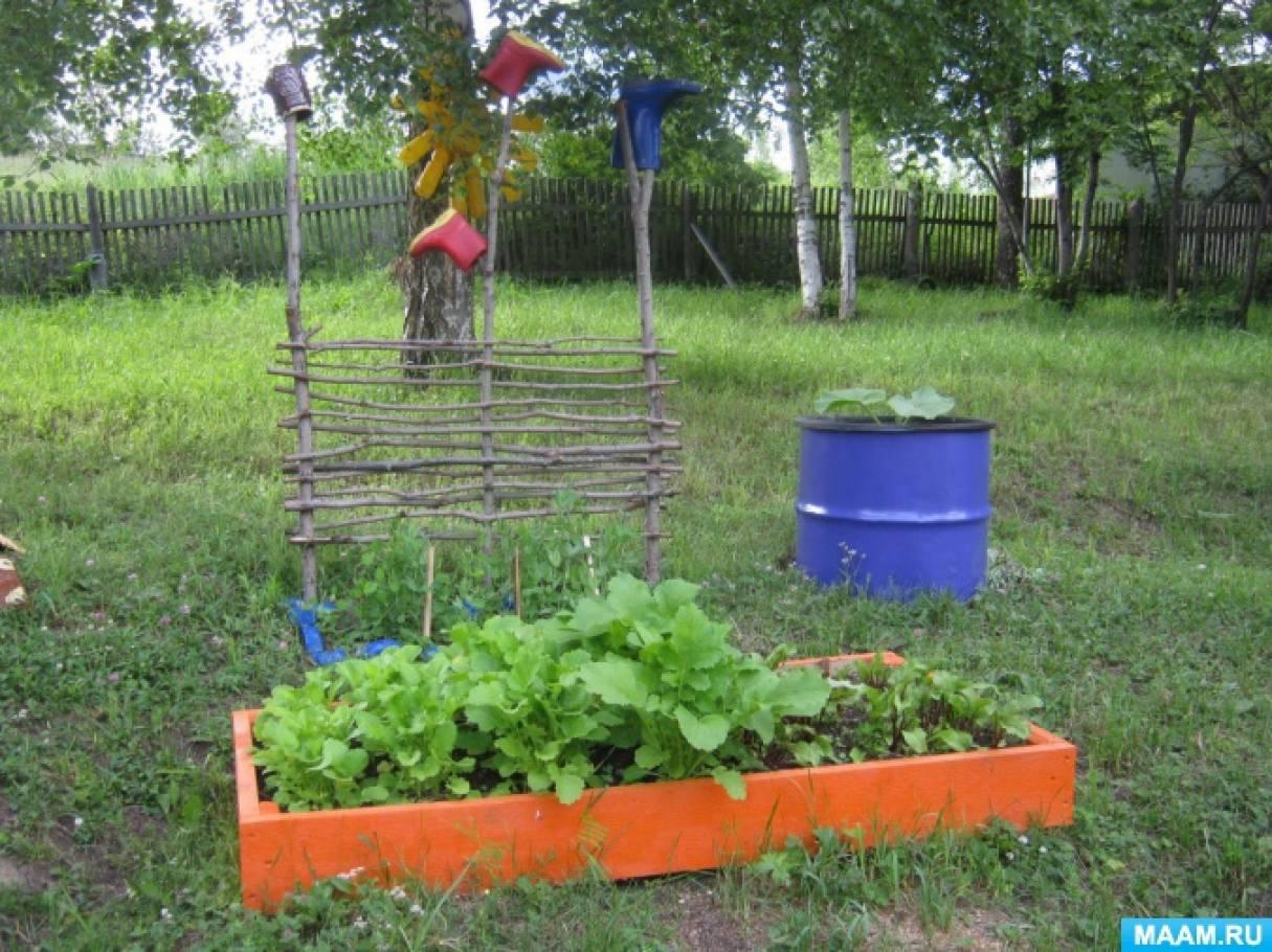 Проект «Огород на нашем участке»