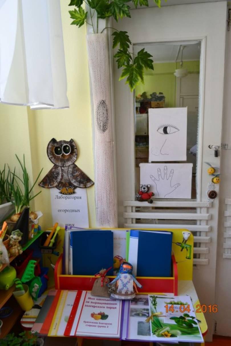 Фотоотчет «Наблюдение за ростом и развитием лука (опытно-исследовательская деятельность с детьми)»