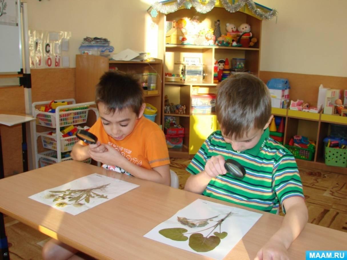 Проектная деятельность дошкольников по изучению лекарственных трав Сахалина