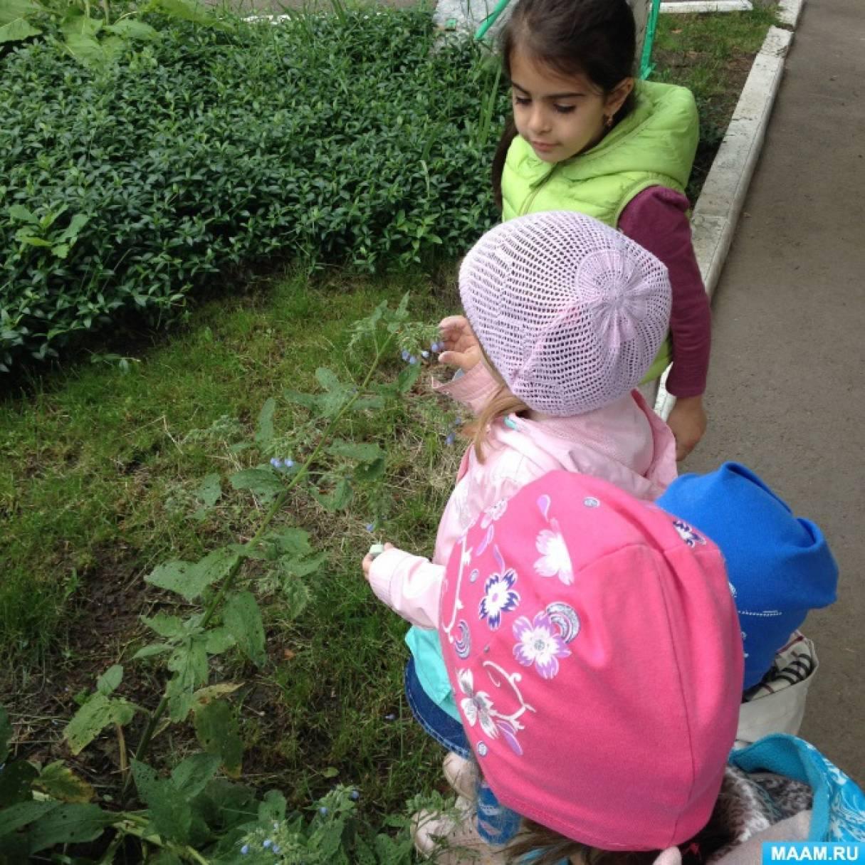 Экологический проект «Цветы вокруг нас»