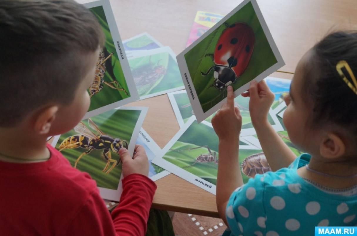 Экологический проект для дошкольников средней группы «Мир насекомых»