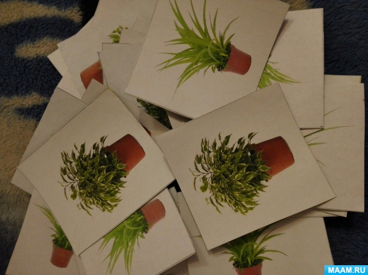 занятие в старшей группе знакомство с комнатными растениями