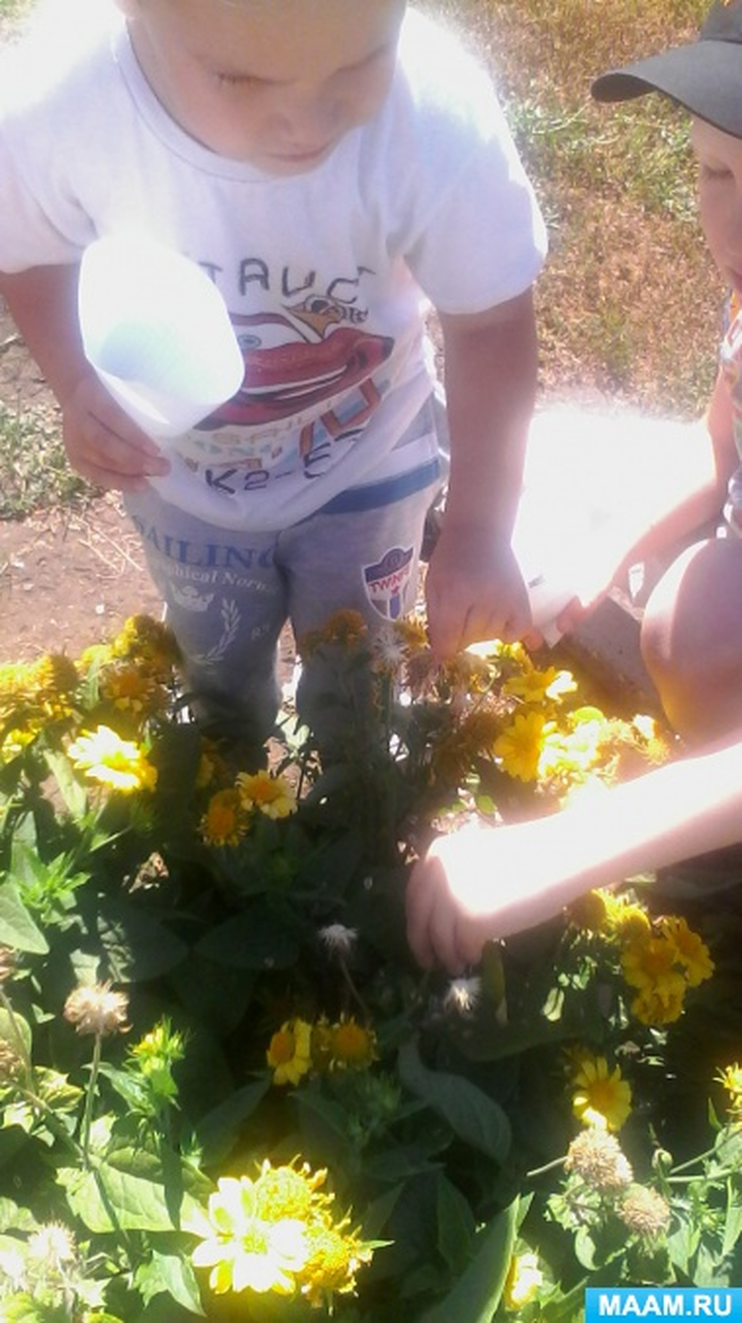 Сбор семян в цветнике
