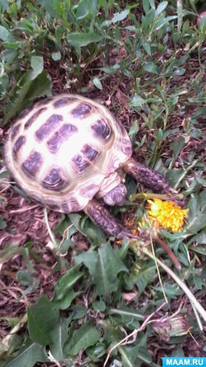 Неподготовленная беседа «В гости к нам пришла черепаха Тортила»
