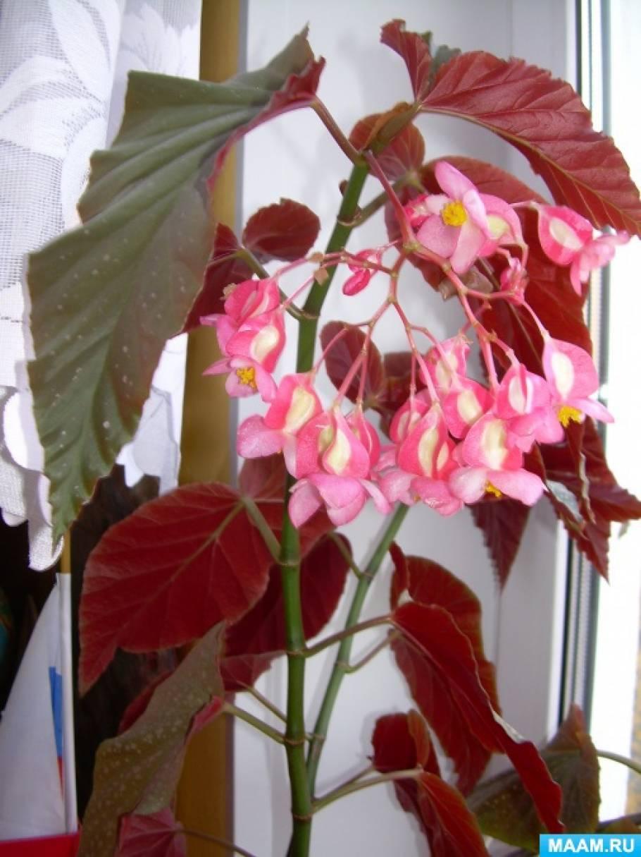 Азбука цветов. Цветочная азбука 77