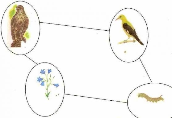 Пищевые цепочки в природе картинки для дошкольников