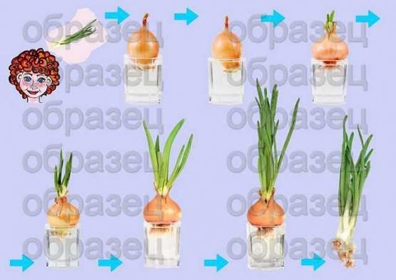 3 Правила посадки семян.