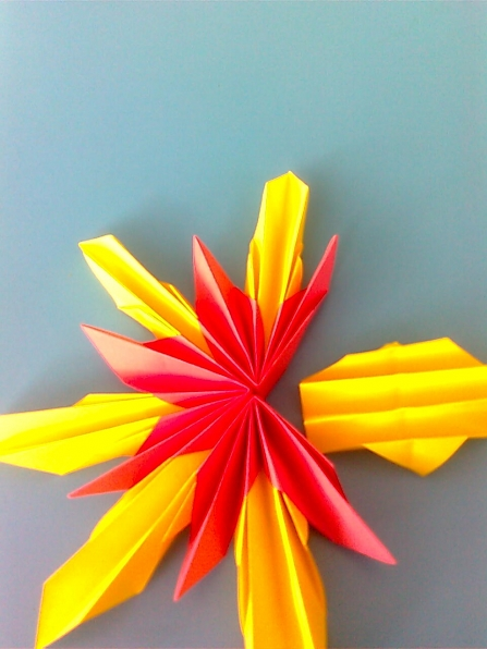 Какой цвет у ракушки
