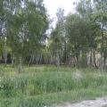 В лес за ягодами к «Могилке»