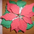 Рождественская звезда— пуансеттия