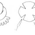 НОД «Герасим-грачевник» (средняя группа)