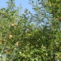 Яблочный спас на славу удался! Фотоотчет о празднике