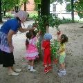 Оформление летнего участка в детском саду