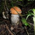 Проект «Грибы» нацелен на то, что бы расширить знания о съедобных и несъедобных грибах.