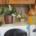 «Веселый Чиполлино»— поделка для проведения опыта по выращиванию лука
