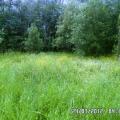 Растительный мир моего Мончегорска.