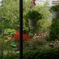 Моё увлечение: садовые цветы