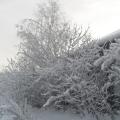 Мороз и солнце— день чудесный! Или просто прогулка.