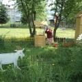 Макеты животных из фанеры. Знакомим детей с домашними животными