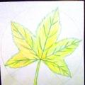 Как нарисовать кленовый лист.
