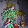 Деревья в моем творчестве