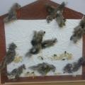 Покормите птиц зимой. Картинки из перьев