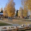 Выставка на участке сада «Золотая осень»