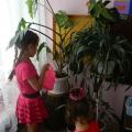 Уголок природы как развивающая среда для экологического образования детей.