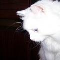 Кошка без имени